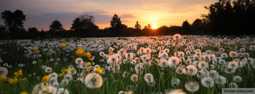 Spring_Season_Flowers_facebook_cover_1347081778