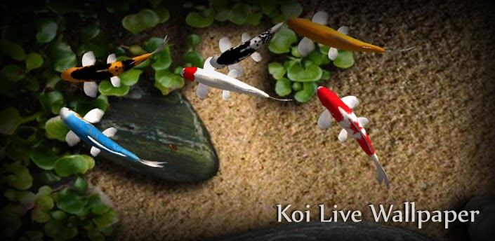 Koi Free Live_ Wallpaper